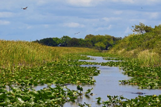 everglades, slogging, airboat, private, tours, swamp