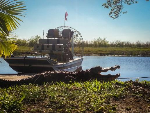 Everglades airboat tour, Miami eco tours, everglades wildlife, Alligator