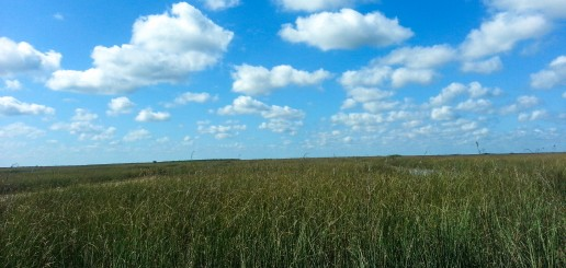 River-of-Grass, Florida-Everglades