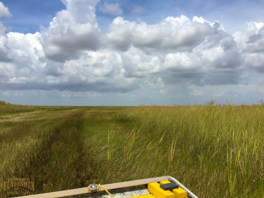 sawgrass, everglades national park, airboat rides