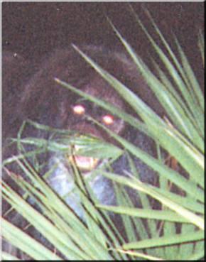 myakka-skunk-ape-everglades-wildlife-miami-eco-tours
