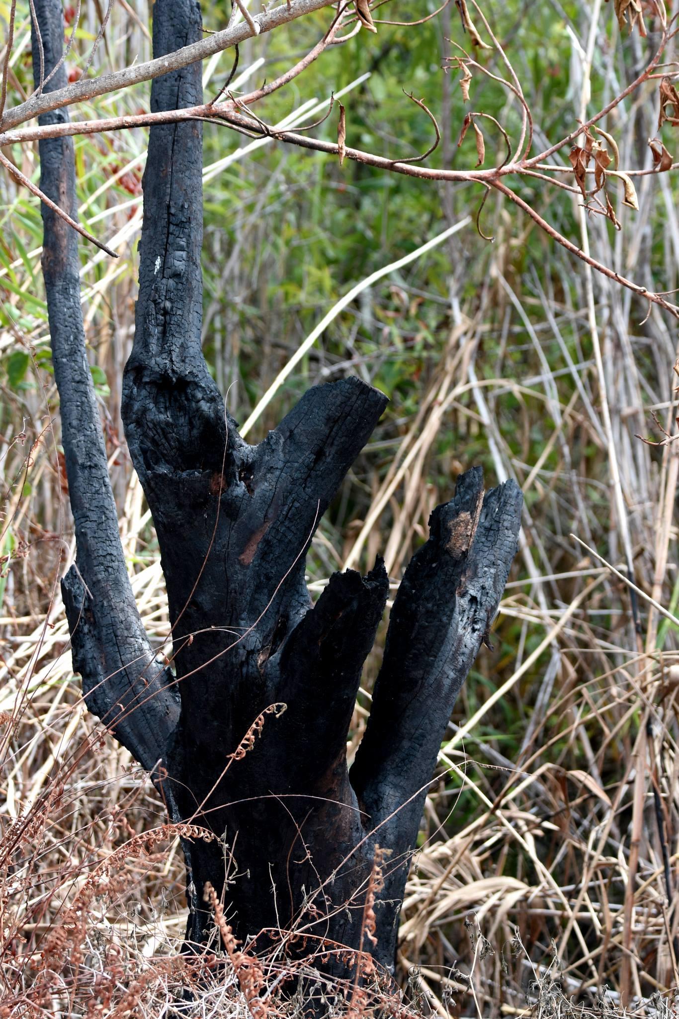 fire in the everglades, everglades ecology, macks fish camp, gladesmen culture