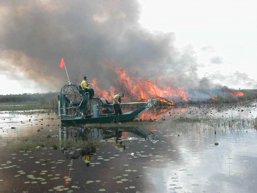 fire in the everglades, everglades ecology, miami airboat tours, everglades fire
